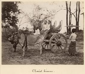 Cart pulled by two oxen at Mandalay, Burma, c.1885 (albumen print from a glass negative) (b/w photo)