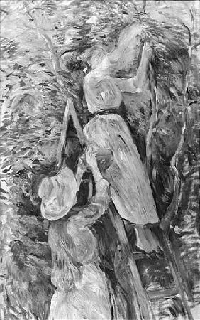 Picking cherries, 1891 (see also 18907)