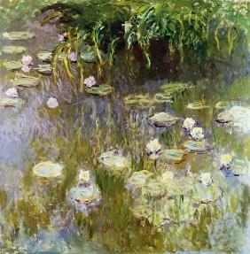 Waterlilies at Midday