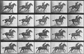 Galloping Horse, plate 628 from ''Animal Locomotion'', 1887 (b/w photo)