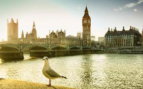 London Seagull