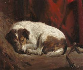 A Sleeping Fox Terrier, 1911 (board)