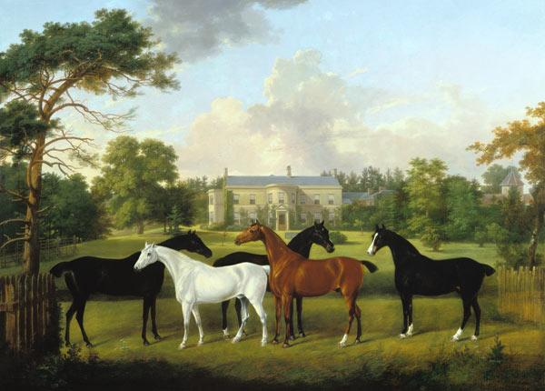 Five racehorses in front of an English country house.