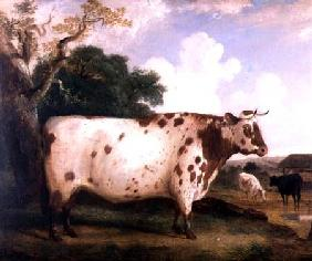 A Shorthorn Bull in a Landscape