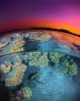 Dusk at the Red Sea Reef