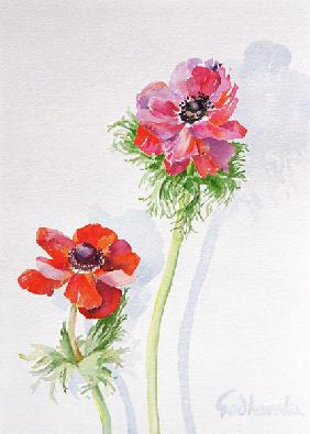 Anemone, 1998 (w/c on paper) (see 124451)