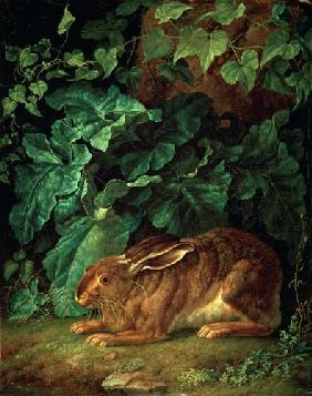 A Hare in Undergrowth