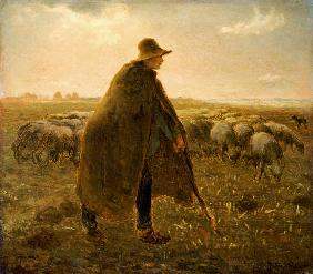 Shepherd with herd at sunset