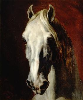 Head of a white horse.