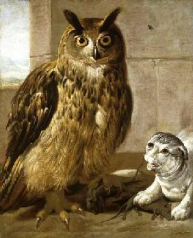 Eagle Owl and Cat with Dead Rats