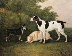 Three Dogs in a Landscape