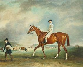 """The Cur"" chestnut racehorse with jockey up on Newmarket Heath"