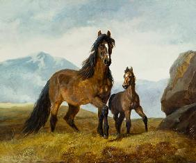A Welsh Mountain Mare and Foal