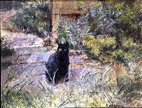 Fat Mog in the Garden (oil on canvas)