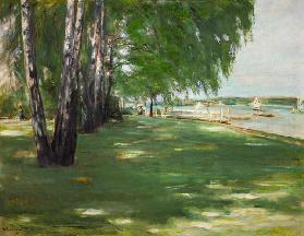 the artists' garden at Wannsee: birches on the lakefront