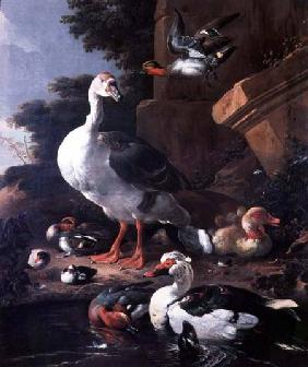 Waterfowl in a classical landscape