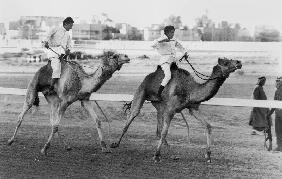 Camel race in Saudi Arabia in honour of Queen Elizabeth II's visit to to the Middle East