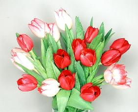 Red & white tulips, 1999 (colour photo)
