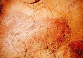 Bison, from the Caves at Altamira