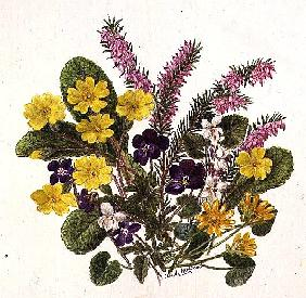 Primroses and Pansies (w/c on paper)