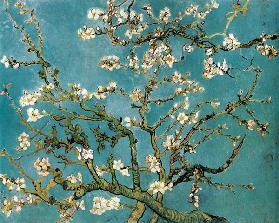 Blossoming almond tree branches