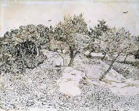 The Olive Trees (pen & ink on paper)