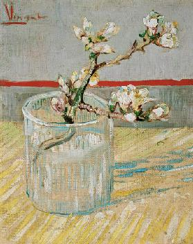 Almond flower branch